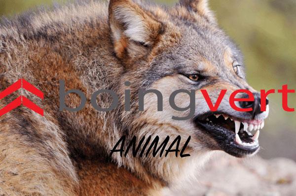boingvert-animal
