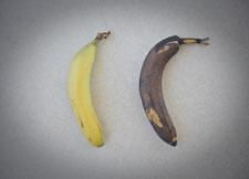 good-banana-bad-banana