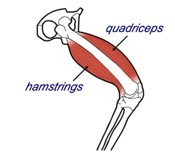 quadriceps-hamstring-relationship